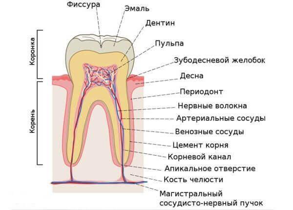 Симптомы и классификация форм по общей характеристике