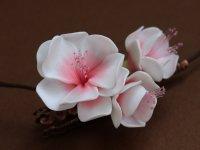Цветок и бутон сакуры